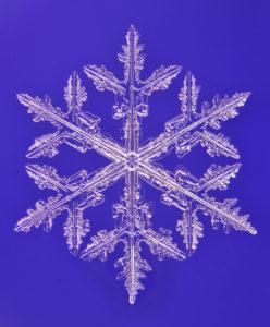 雪結晶の顕微鏡写真(普通樹枝)北海道大雪山系旭岳にて撮影(以下同じ),結晶の径は3.1mm(著作者名:油川英明)